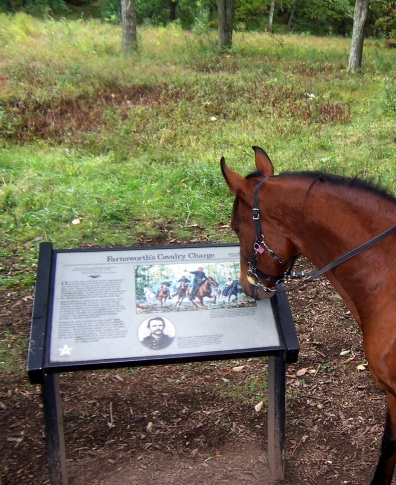 Even horses read! Are you going to hate on horses?