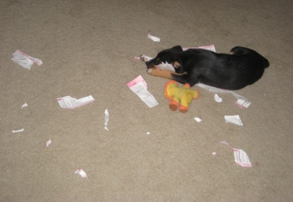 The shredding of the paper. It is fun. (this is Lucky by the way)