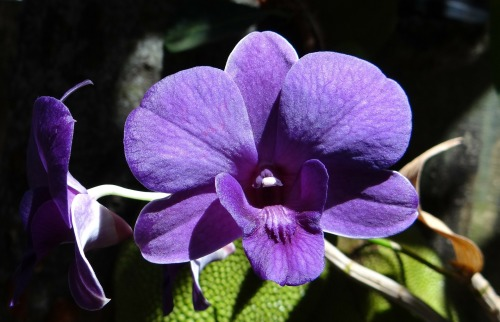 orchid-172206_1920