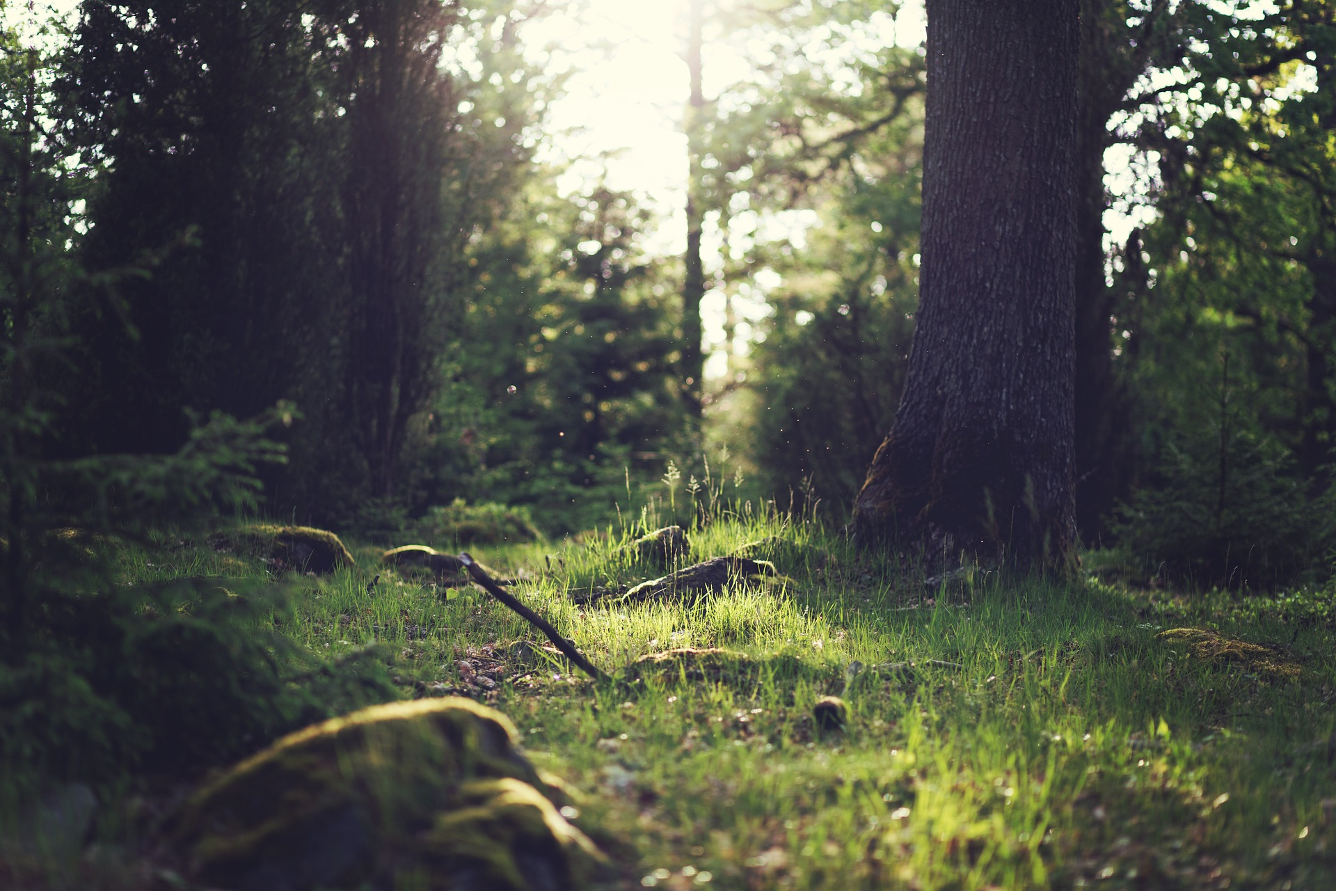 forest-653448_1920